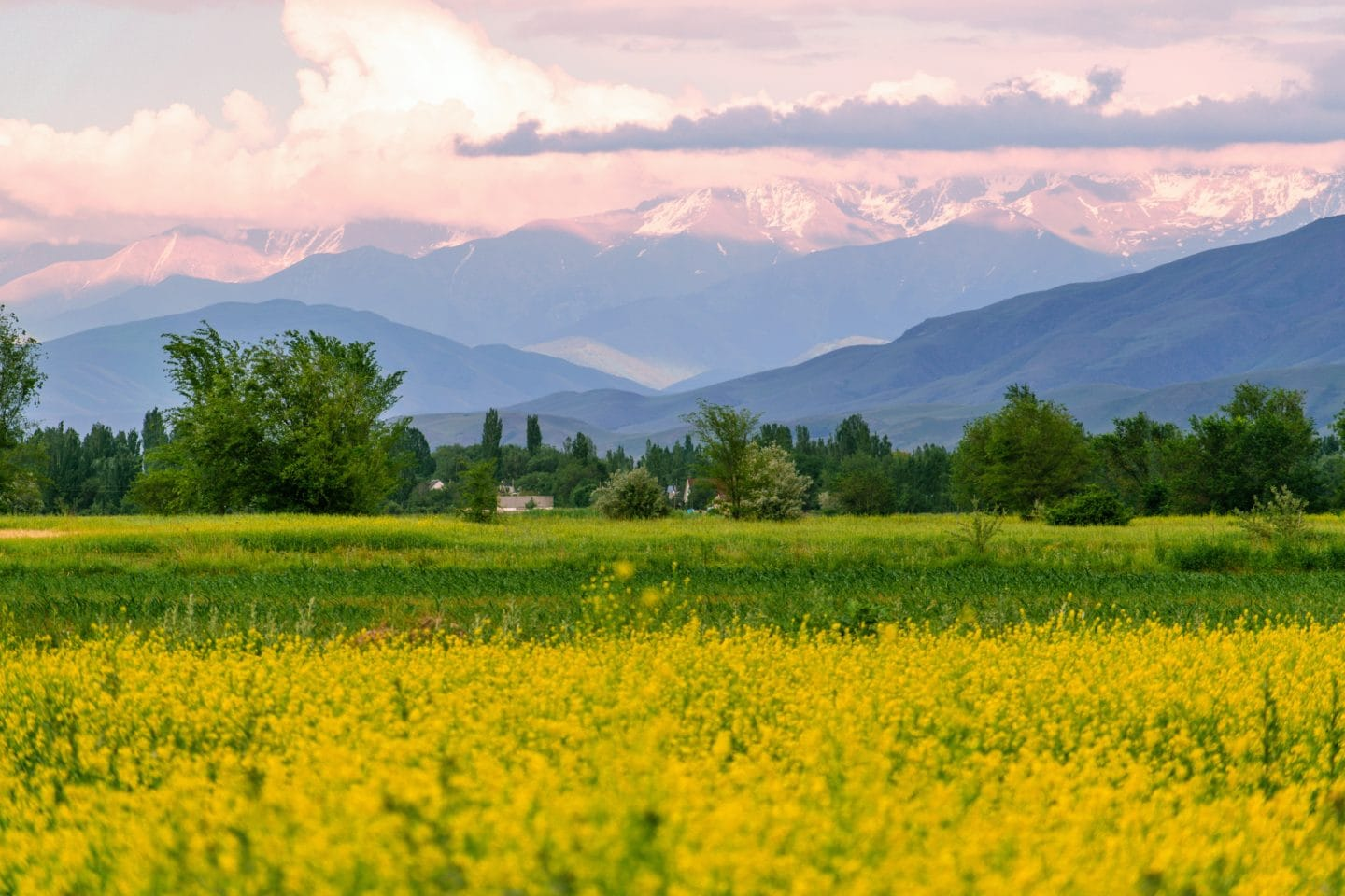 Kyrgyzstan field and mountains